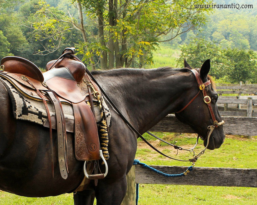 زین اسب به همراه عرق گیر